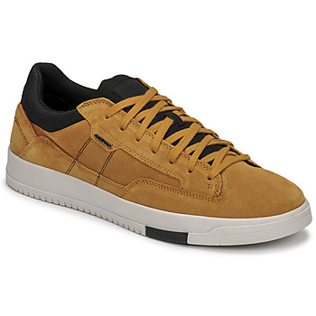 Chaussures Homme Baskets basses Geox SEGNALE Camel