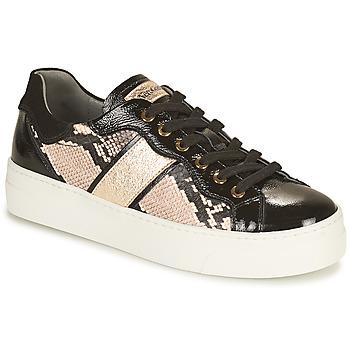 Chaussures Femme Baskets basses NeroGiardini BETTO Noir / Doré