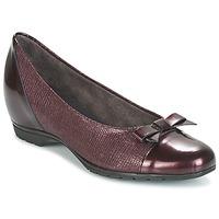 Chaussures Femme Ballerines / babies Pitillos 3614 Bordeaux